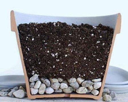 Драцена почва, грунт и дренаж